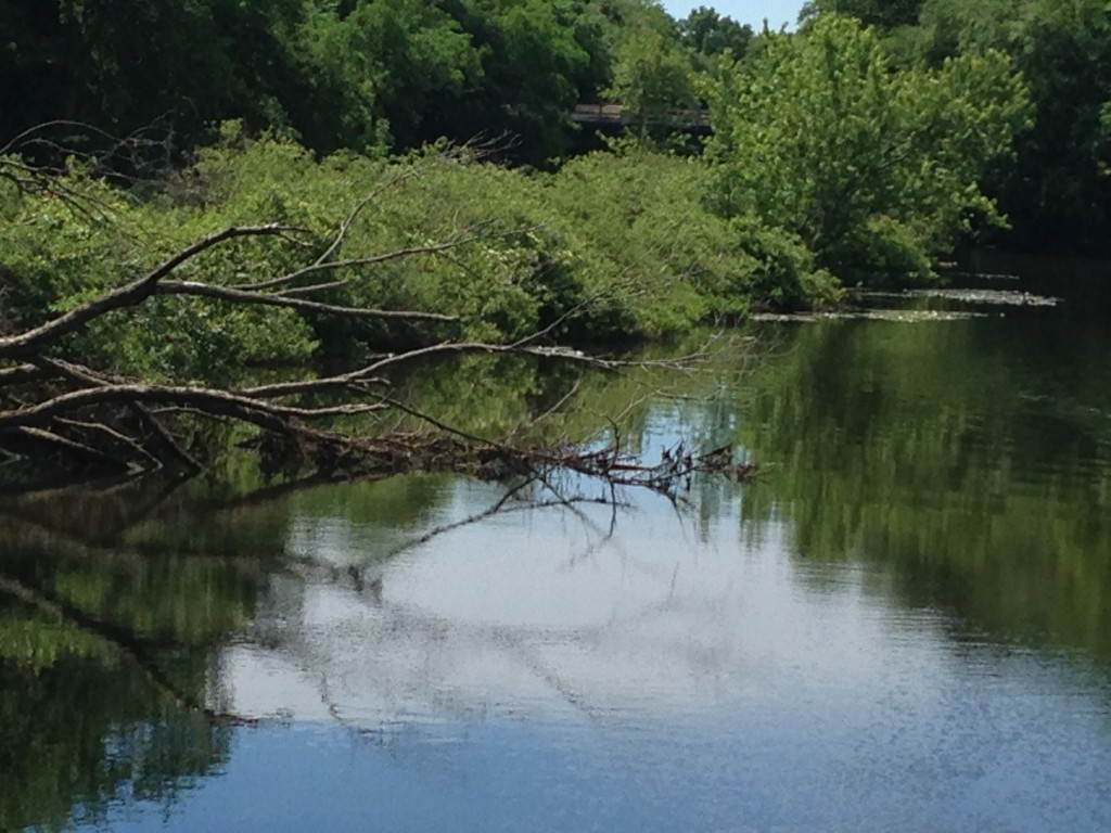 Mill River, New Haven 6-21-14